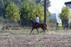 Balcaniada Ecvestra Buftea (38)