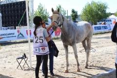 Balcaniada Ecvestra Buftea (46)