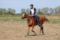 Balcaniada Ecvestra Buftea (53)